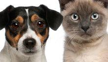 sportello-animali-affezione2